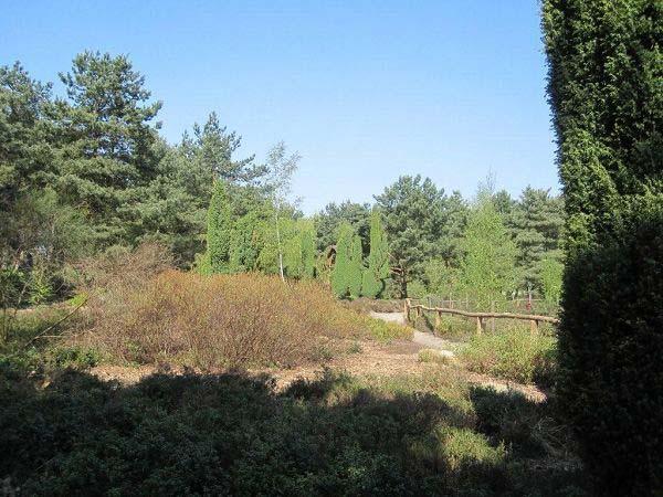 Heidelandschaft Rombergpark