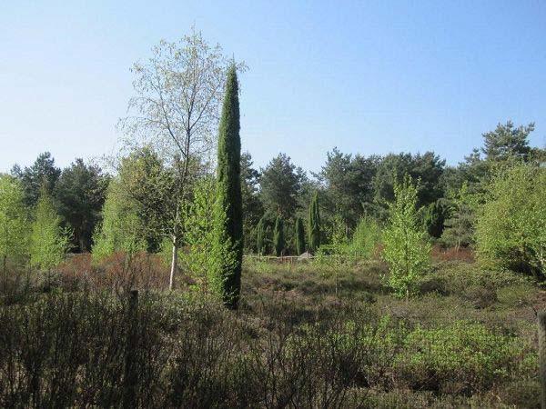 Moorlandschaft Rombergpark