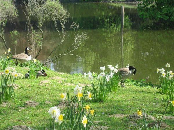 Rombergpark Frühling