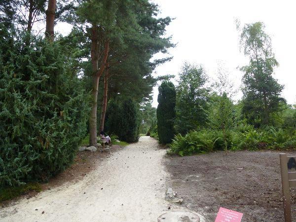 Rombergpark Weg