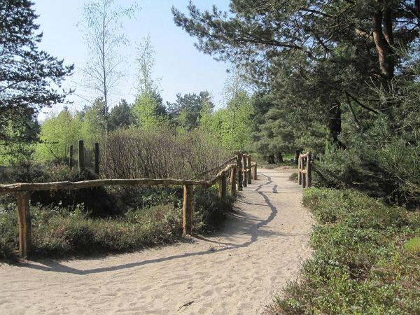 Wandern Rombergpark